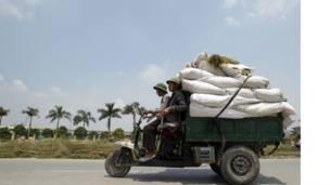 موسم الحصاد الفيتنامي بدأ