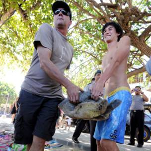 Wisatawan melepas penyu di Bali