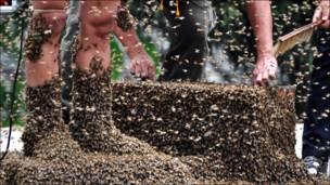 Бджоли замість шкарпеток