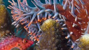 Coral (Foto: Octavio Aburto/ iLCP)