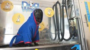 محطة لغسيل الكلاب في لايبزغ بألمانيا