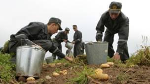 Белорусские солдаты на картошке