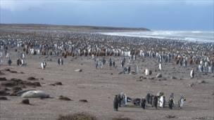 Nghiên cứu khoa học về thay đổi khí hậu ảnh hưởng như thế nào lên hành vi của chim cánh cụt.