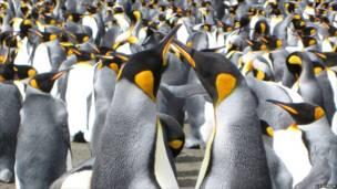Hai con chim cánh cụt đang múa