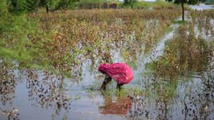 सिंध बाढ़