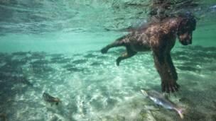 © Paul Souders / Veolia Environnement Wildlife Photographer of the Year 2011