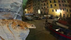 © Emanuele Biggi / Veolia Environnement Wildlife Photographer of the Year 2011