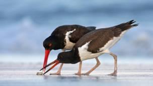 © Mateusz Piesia / Veolia Environnement Wildlife Photographer of the Year 2011