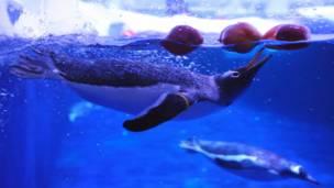 Пингвин в Лондонском аквариуме