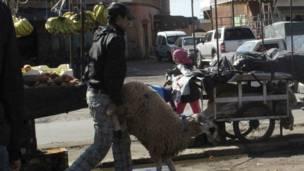 د مغرب په مراکش ښار کې یو سړی د قربانۍ ګډ د څارویو له بازاره بیايي.