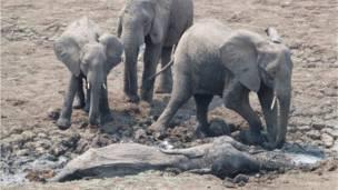 Фото: Abraham Banda / Norman Carr Safaris