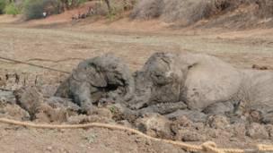 Fotos: Abraham Banda / Norman Carr Safaris