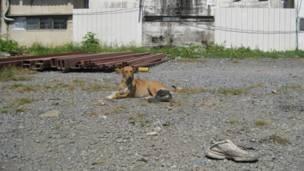 Một chú chó phơi mình giữa trời nắng tại một bãi đất hoang gần ga xe điện trên cao ở Mochit