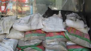 A homeless dog is sleeping on anti-flood sandbag wall