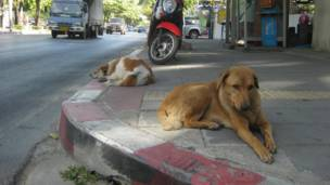 A homeless dog and his company