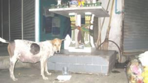 Một chú chó hoang được người thương tình cho chút cơm thừa canh cặn
