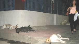 Chó hoang ngủ ngon lành ngay sát một quán nhậu ồn ào
