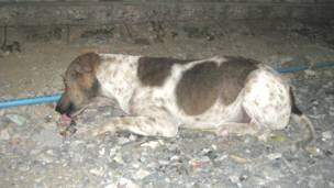 A homeless dogs whose body is spotted by scabies
