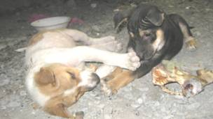 Two puppies are squabbling over a bone