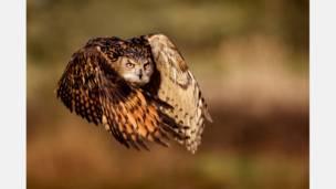 Foto: Mark Bridger/National Geographic Photo Contest