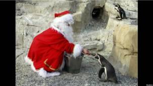 Кормежка пингвинов в парке Маринлэнд