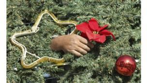 یو کارکوونکي د لبنان په جنوب صیدا ښار کې د کریسمس ونې ته زینه ږدي.