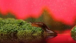 Imagem: Nadav Bagim (AimishBoy)/www.aimishboy.com