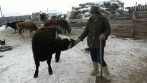 Oyungerel與她的牲口