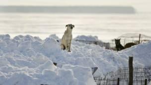 Приют для животных в Румынии