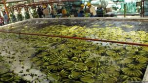 Бананы в Эквадоре