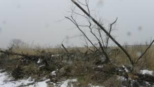 倒壞、枯死的樹木