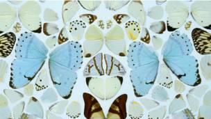 Дэмиен Херст, одна из инсталляций из крыльев бабочек