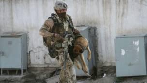 Служебная собака НАТО в Кабуле