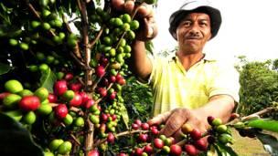 Cultivador de café en Colombia
