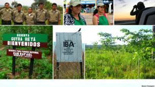 Collage con imágenes del trabajo de Guyra Paraguay