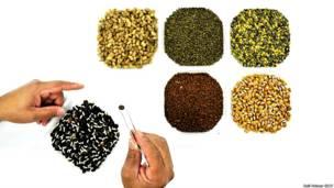 Semillas enviadas al gran depósito Global Seed Vault en Noruega