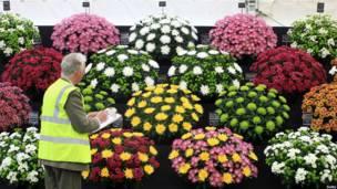 На выставке цветов в Уэльсе