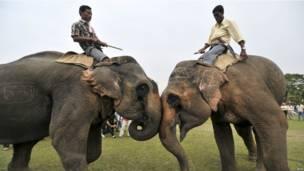 Бой слонов в Индии