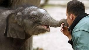 Слоненок по имени Ассам семи дней от роду играет со смотрителем