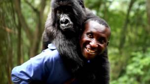 Gorila brinca com um dos patrulheiros.