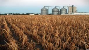 Засуха и цены на продовольствие
