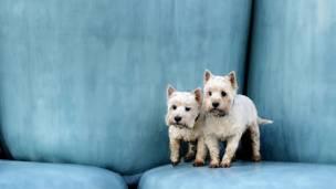 Foto: © Paws Pet Photography