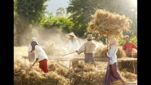 मूंगफली के बगान, बर्मा, फिलिप ली हॉर्वे