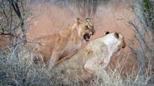 تصوير مايكل موس  في محمية ماديكوي في جنوب أفريقيا