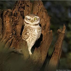 Wild Photos traz imagens do mundo todo e fotógrafos para workshops sobre fotos de natureza.