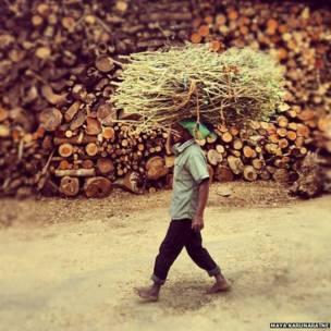 Hombre con un lote de madera