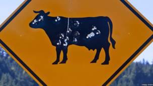 Vaca en un letrero
