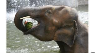 योंगिन एम्यूज़मेंट पार्क, हाथी