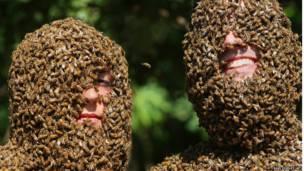 Arı Sakalı Şampiyonası