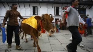 गाई जात्रा, नेपाल, स्वांग